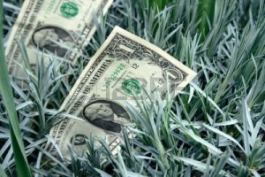 4685513-one-dollars-bankote-grows-among-green-grass-in-the-bed