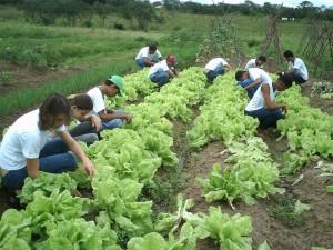 comunità-agricola