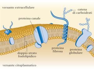 confini membrana